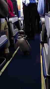 pingüino en un avión