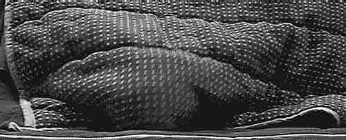 bajo las sábanas