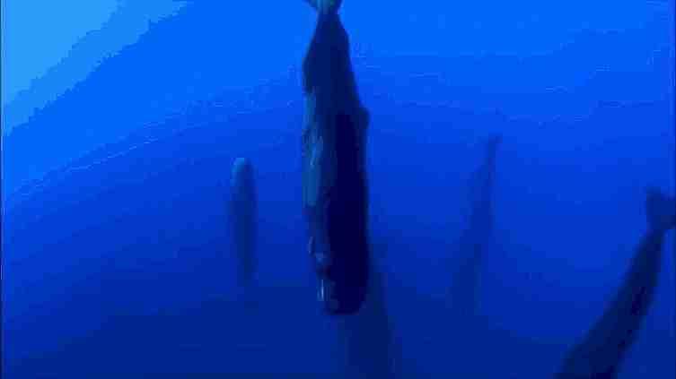 Ballenas durmiendo
