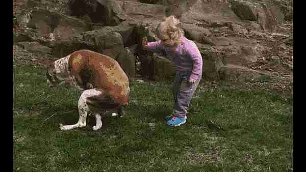 perro defecando