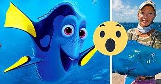 Esta Mujer Atrapó Un Pez Azul Que Probablemente Salió De 'Buscando a Dory'