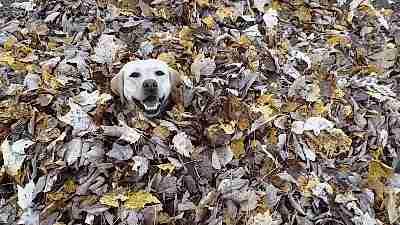gif perro escondiéndose entre las hojas