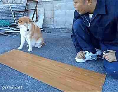Hombre y perrito midiendo una tabla