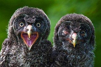 Aves sorprendidas