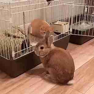 gato atacando conejo