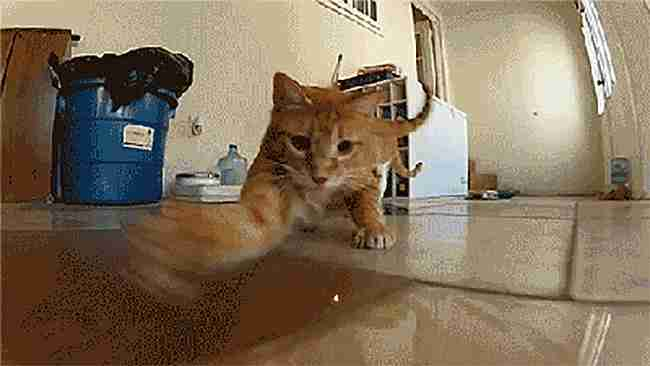 Gato persiguiendo un haz de luz