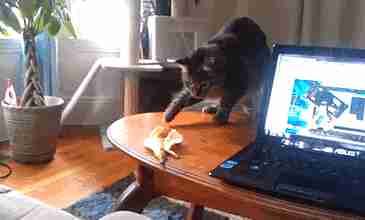 gato cascara de platano
