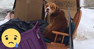 Este Perro Fue Tirado A La Calle Y Construyó Su Propio Hogar Con Desechos Para Sobrevivir.