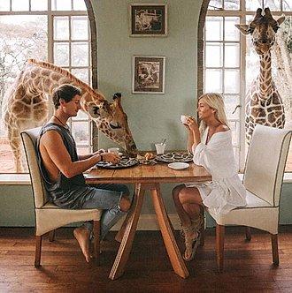 pareja comiendo con girafas