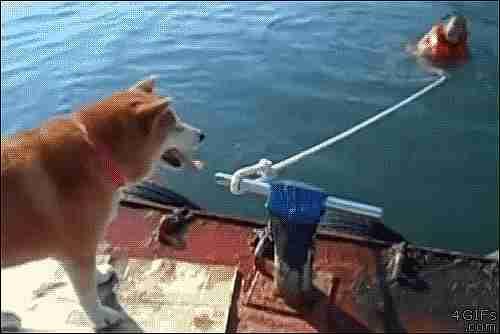perro soltando una cuerda