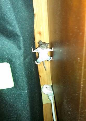 raton mision imposible