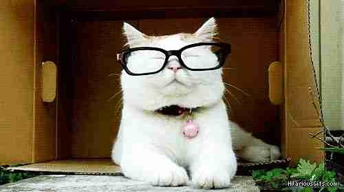 gato con gafas