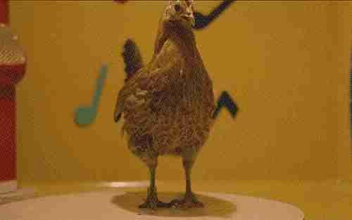 pollo bailarín