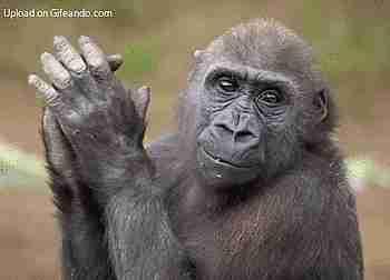 gif mono aplaudiendo