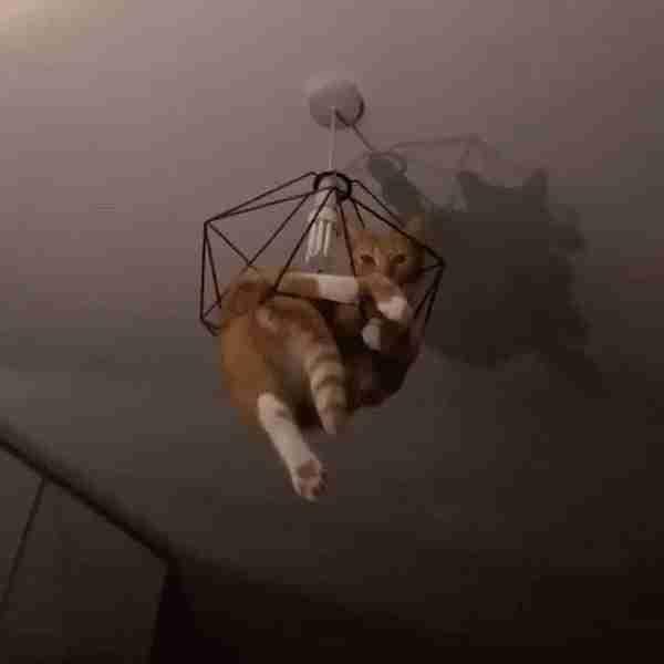 gato metido en la lampara