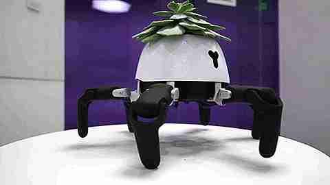 robot cuida plantas