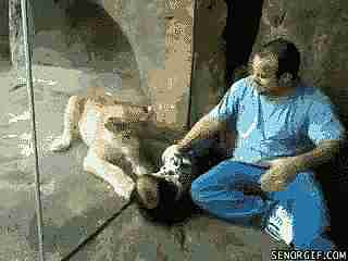 Leon jugando con niño